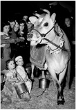 Elsie the Cow 1947 Archival Photo Poster Photo