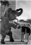 Kids With Elephant 1970 Archival Photo Poster Posters