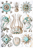 Narcomedusae Nature Art Print Poster by Ernst Haeckel Print
