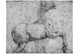 Raffael (Horse study) Art Poster Print Prints