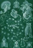 Siphonophorae Nature Art Print Poster by Ernst Haeckel Masterprint