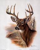 Ruane Manning (Fall Splendor Deer) Art Poster Print Zdjęcie