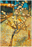 Vincent Van Gogh Flowering Pear Art Print Poster Print