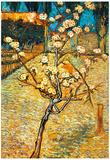 Vincent Van Gogh Flowering Pear Art Print Poster Print