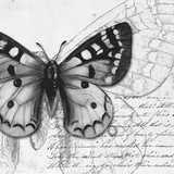 Butterfly Studies I Posters by Patricia Pinto