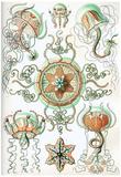 Trachomedusae Nature Art Print Poster by Ernst Haeckel Zdjęcie