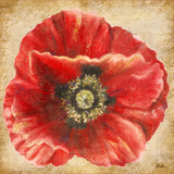 Red Poppy on Gold Art by Patricia Quintero-Pinto