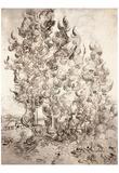Vincent Van Gogh (Cypress grove) Art Poster Print Prints