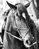 Derby I Lámina por Susan Bryant