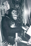 Space Chimp Archival Photo Poster Print Masterprint