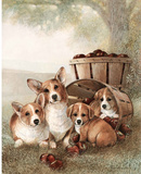 Pack of Corgis (Apples) Art Print Poster Posters