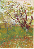 Vincent Van Gogh (Cherry Tree) Art Poster Print Posters