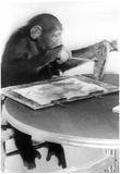 Painting Monkey Archival Photo Poster Posters
