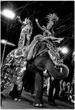 Ringling Brothers Circus Elephants Archival Photo Poster Posters