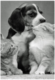 Puppy and Kittens Archival Photo Poster Print Posters