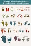 North Eastern Animal Tracks Art Poster Print Masterprint
