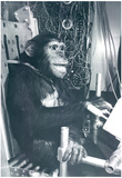 Space Chimp Archival Photo Poster Print Posters