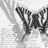 Butterflies Studies II Prints by Patricia Pinto