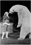 Polar Bear Kiss Archival Photo Poster Posters
