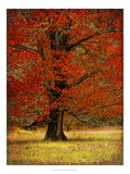 Autumn Oak II Poster by Danny Head