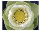 Delicate Lotus II Premium Giclée-tryk af Jim Christensen