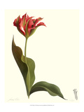 Tulip I Giclee Print by James Linton Sain