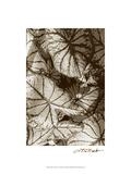 Garden Textures IV Posters by Laura Denardo