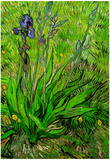 Vincent Van Gogh The Iris Art Print Poster Posters