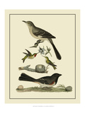 Bird Family V Prints by A. Lawson