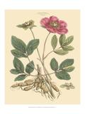Blushing Pink Florals I Prints by  John Miller (Johann Sebastien Mueller)