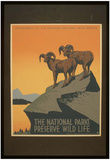 National Park Service (The National Parks Preserve Wild Life) Art Poster Print Foto