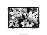 Striking Orchids III Prints by Laura Denardo