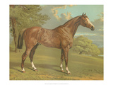 Cassell's Thoroughbred I Posters by  Cassell