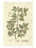 Non-Embellished Vintage Foliage I Prints by  Blackwell