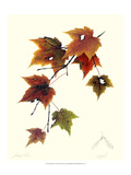 Maple Tree Giclee Print by James Linton Sain