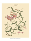 Blushing Pink Florals VI Posters by  John Miller (Johann Sebastien Mueller)