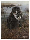 A Friend in the Marsh Premium Giclee Print by Kevin Daniel
