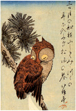Utagawa Hiroshige Small Brown Owl on a Pine Branch Art Print Poster Plakater