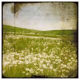 Field I Plakater af Ingrid Blixt