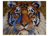 Tiger Giclee Print by Robert Tate