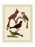 Bird Family IV Posters by A. Lawson