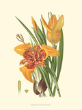 Striking Lilies I Poster by Edward Step