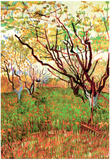 Vincent Van Gogh Orchard in Blossom Art Print Poster Photo