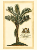 British Colonial Palm IV Poster
