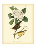 Canada Flycatcher Poster af John James Audubon