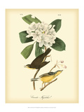 John James Audubon - Canada Flycatcher - Tablo