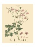 Blushing Pink Florals IX Plakat af John Miller (Johann Sebastien Mueller)
