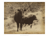 Lone Star Cows I Prints by Jarman Fagalde
