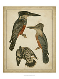 Vintage Kingfishers I Posters