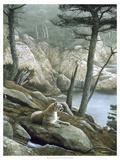 Cougar Prints by Kevin Daniel